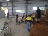 AIing ewes 2014